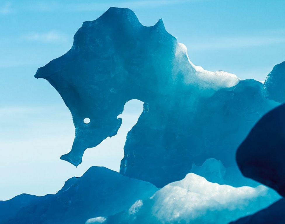 Морський коник з льоду