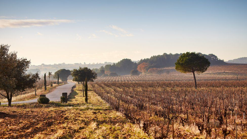 A Beaucastel vineyard in Châteauneuf-du-Pape