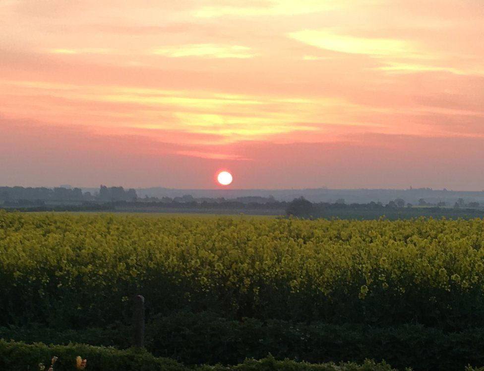Sun rise over rapeseed fields
