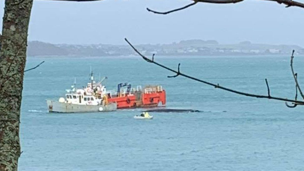 Two boats at sea working to remove the whale