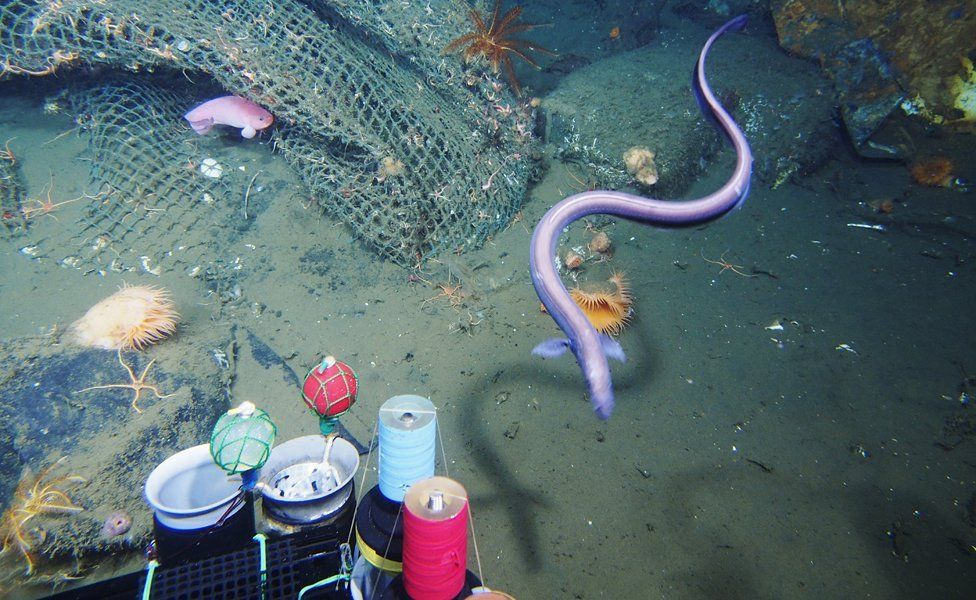 marine debris: fishing net sunk in 745m deep submarine canyon, pictured on July 14, 2014.