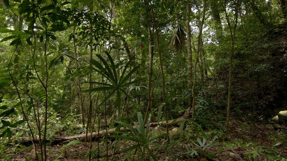 Guatemalan jungle with a mound covered in foliage in the background.