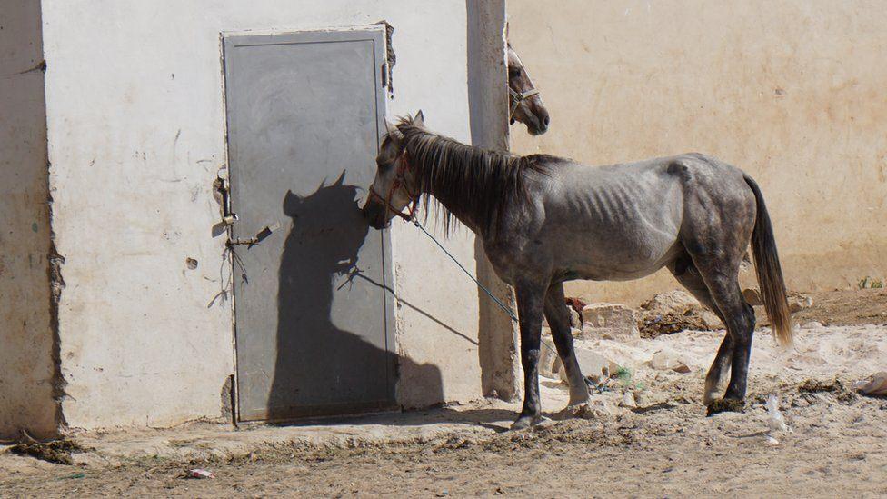 Skinny horse at Petra