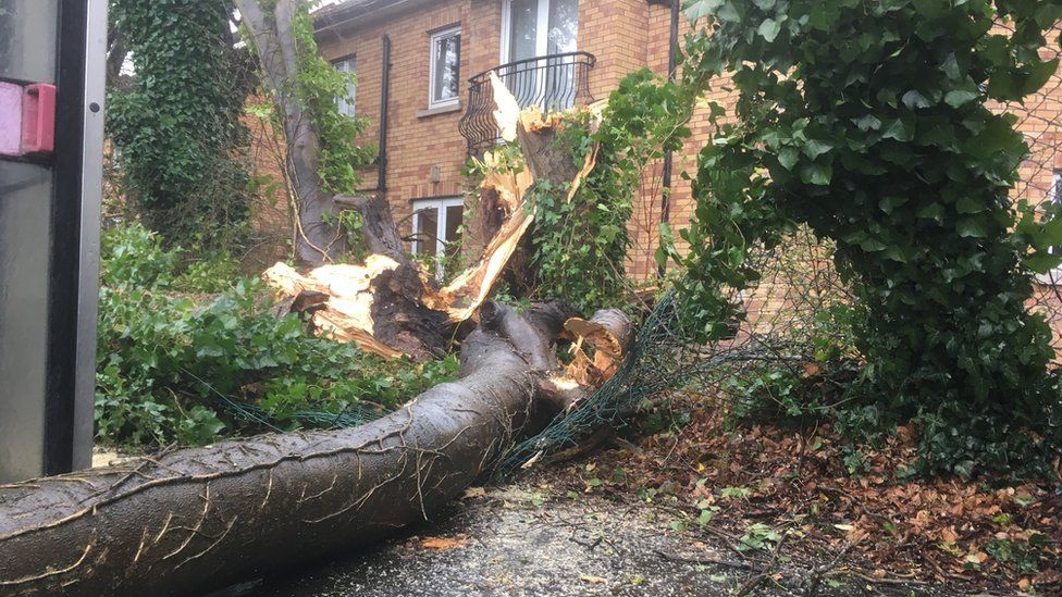 A tree breaking through a fence at a house in Nelson Drive.