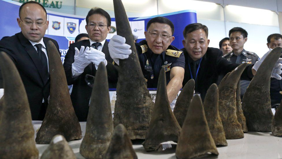 Thai customs officers display seized rhino horns during a press conference