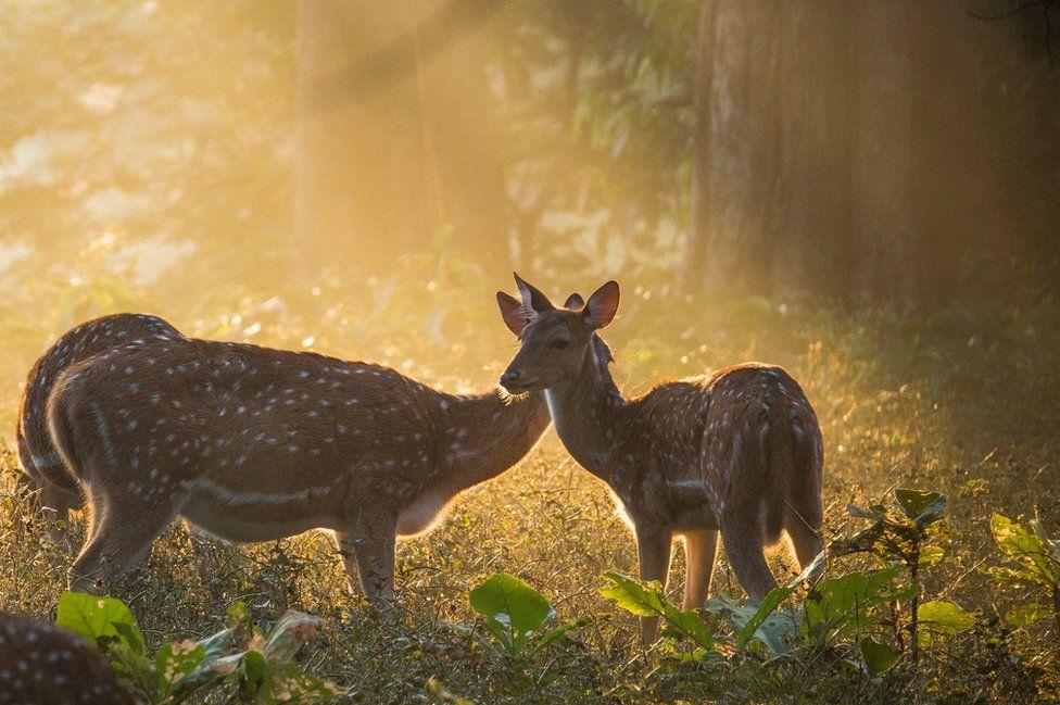 Two deer in the sunlight