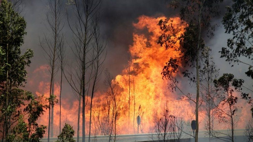 Fire and smoke is seen on the IC8 motorway during a forest fire near Pedrogao Grande, in central Portugal, 18 June 2017.