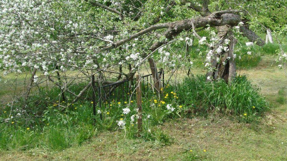 Flowering tree on Skof's farm