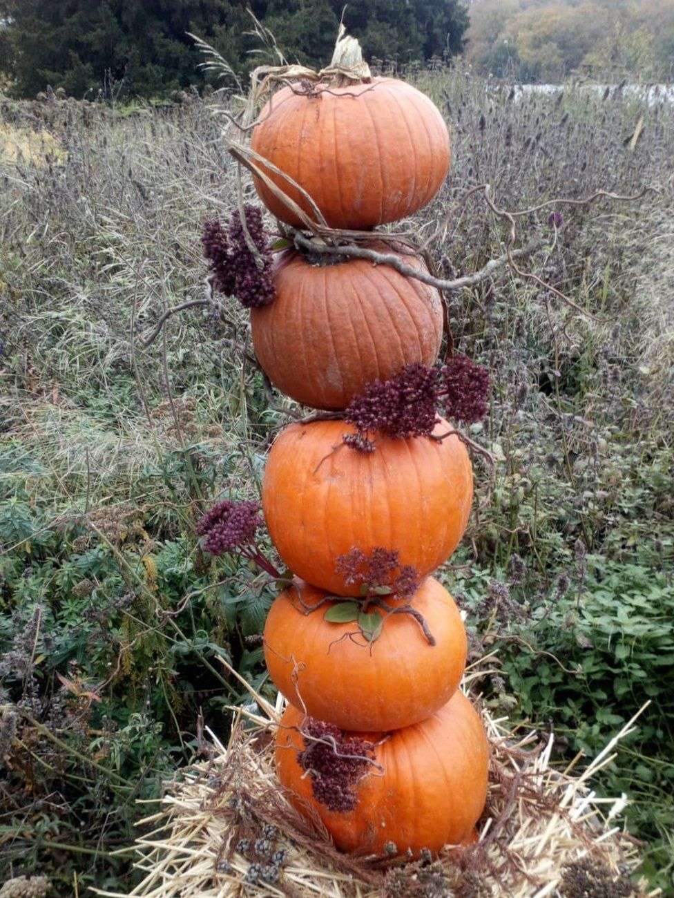 A column of pumpkins