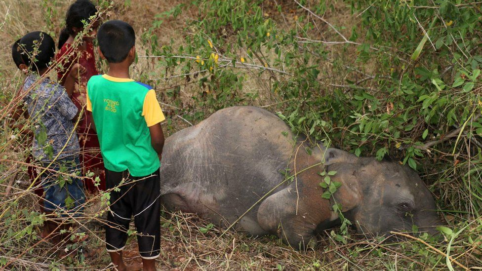 Sri Lankan children look at the body of an elephant at Cheddikulam, some 260 kilometres (162 miles) north of Colombo on August 17, 2016, after it was hit by a train