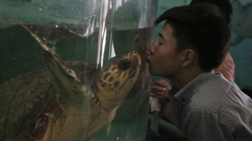A North Korean man kisses a turtle through the glass of its tank at the newly opened Pyongyang Central Zoo in Pyongyang, North Korea, Tuesday, Aug. 23, 2016.