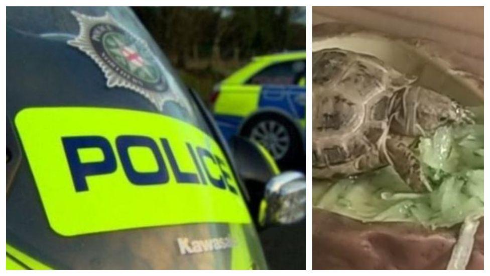 Police appeal after pet tortoise stolen in break-in