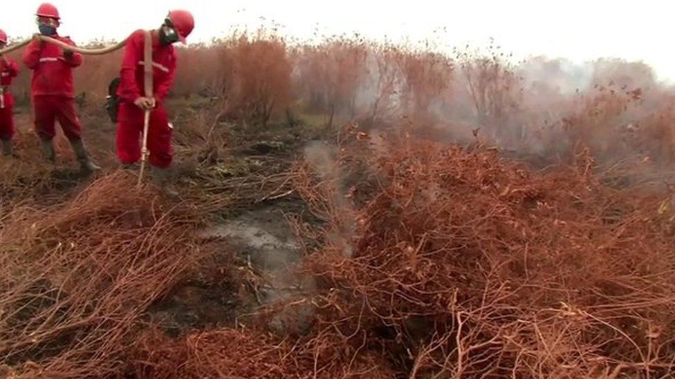 Peat land fire in South Sumatra