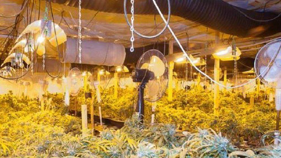 Cannabis factory