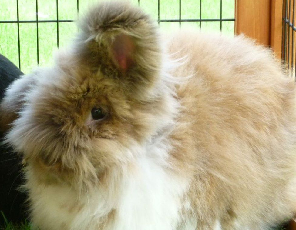 Teddy the rabbit