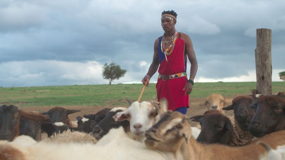 Richard Turere with his goats