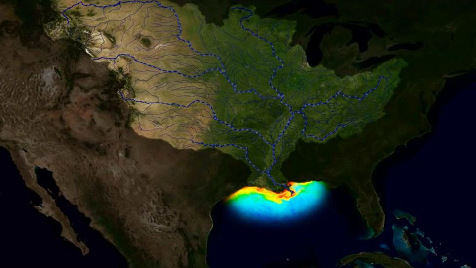 La enorme zona muerta que resurgió en el golfo de México y puede convertirse en la más letal de la historia