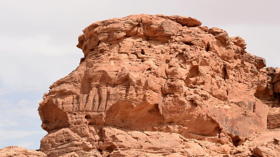 Camels carved into rock faces in Saudi Arabia