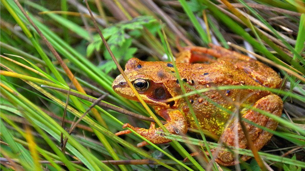This bonnie wee Frog was in Glen Lyon near Bridge of Balgie on Monday. Eric Niven, Dundee