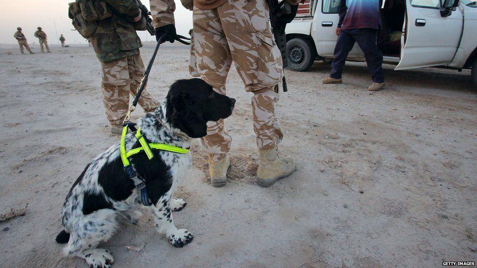 A military dog