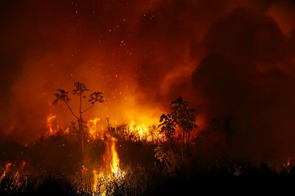 A forest fire in the Pantanal