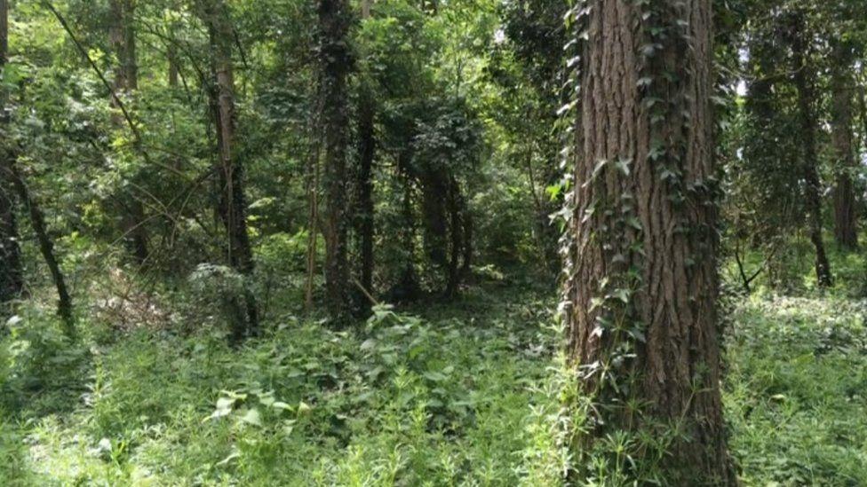 Oppy Wood today