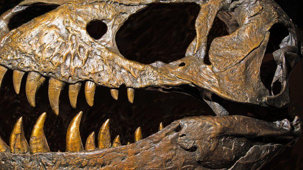 Cientistas identificam possível origem dos dinossauros - e eles podem ser britânicos
