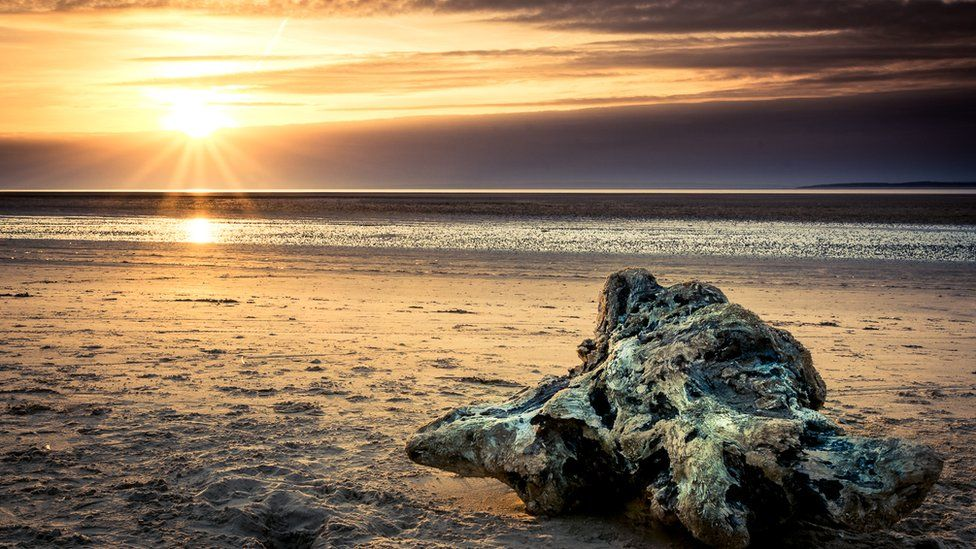 An old tree stump washed up on Whiteford Sands, Gower,