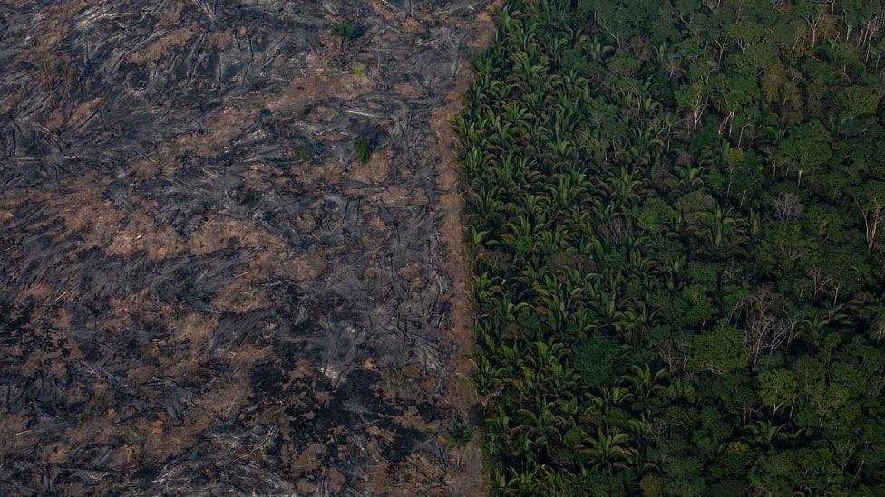 Fire damage near Porto Velho, Brazil.