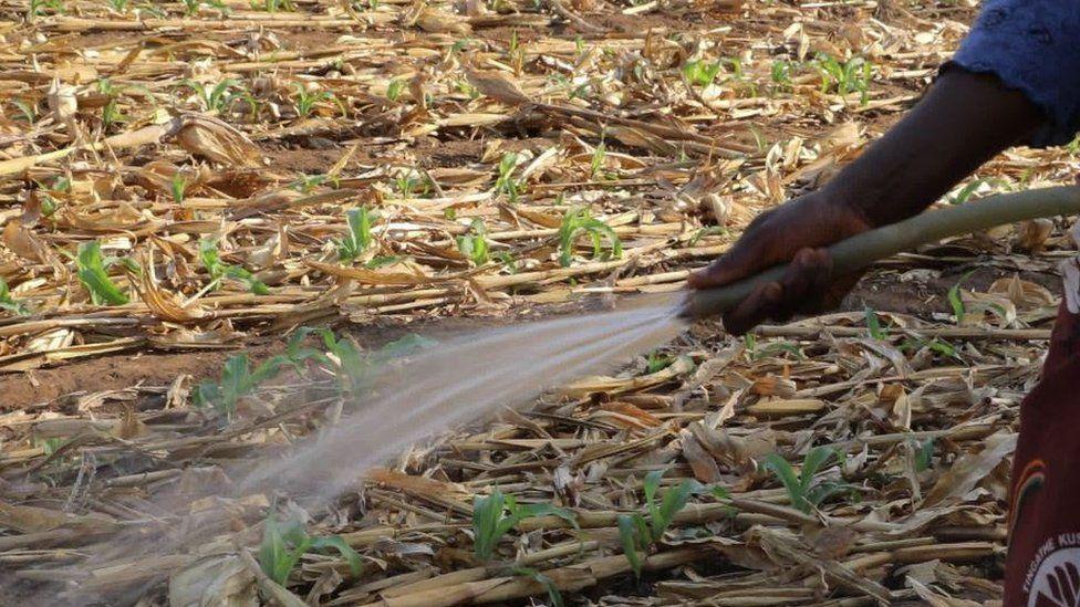 Malawi irrigation project