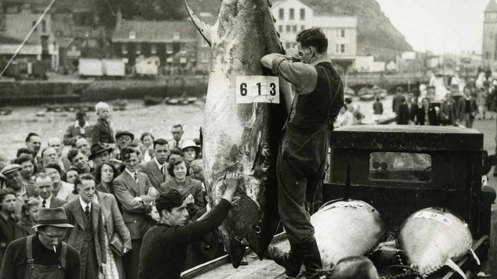 A crowd gathers as Bluefin tuna are being hauled ashore in Scarborough in August 1949