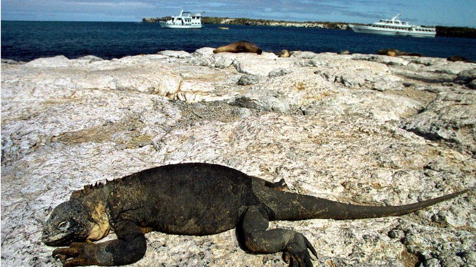 Photo taken the 26 September 2000 in the Galapagos Islands shows an iguana resting on the rocks with several several tourist yachts at rear.