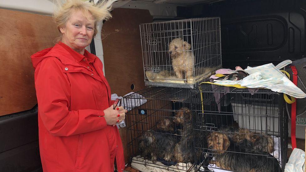 Photo of Eileen Jones with the rescued dogs in her van