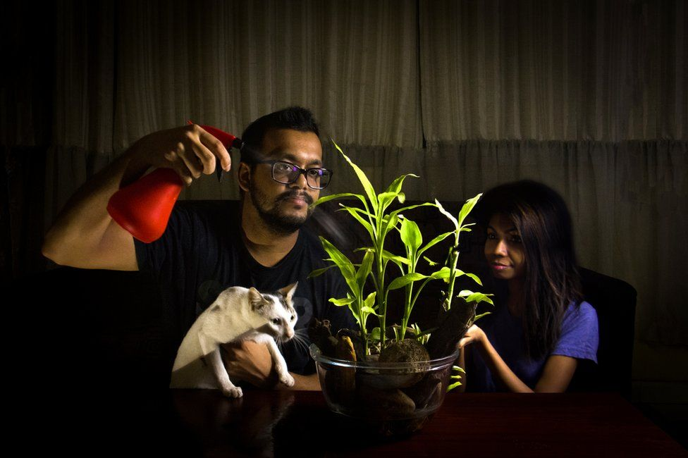 A man and a woman spraying a plant whilst holding a cat