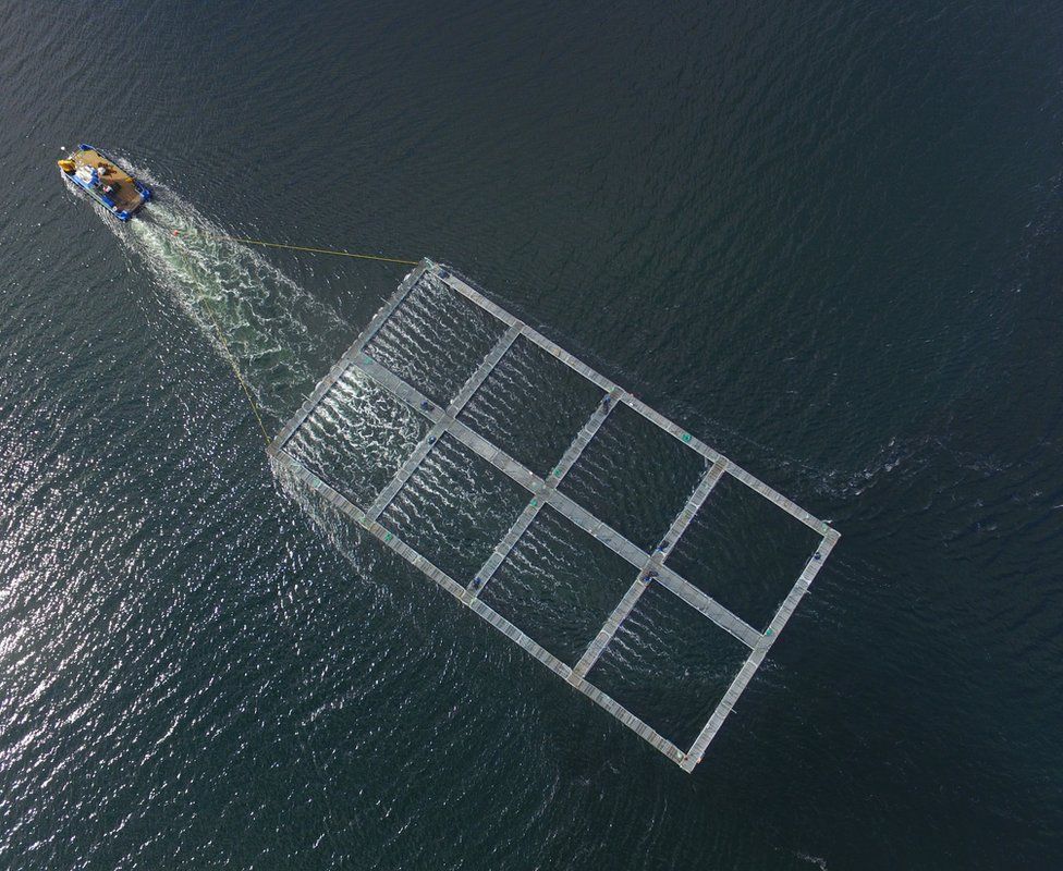 Salmon cage towed by boat