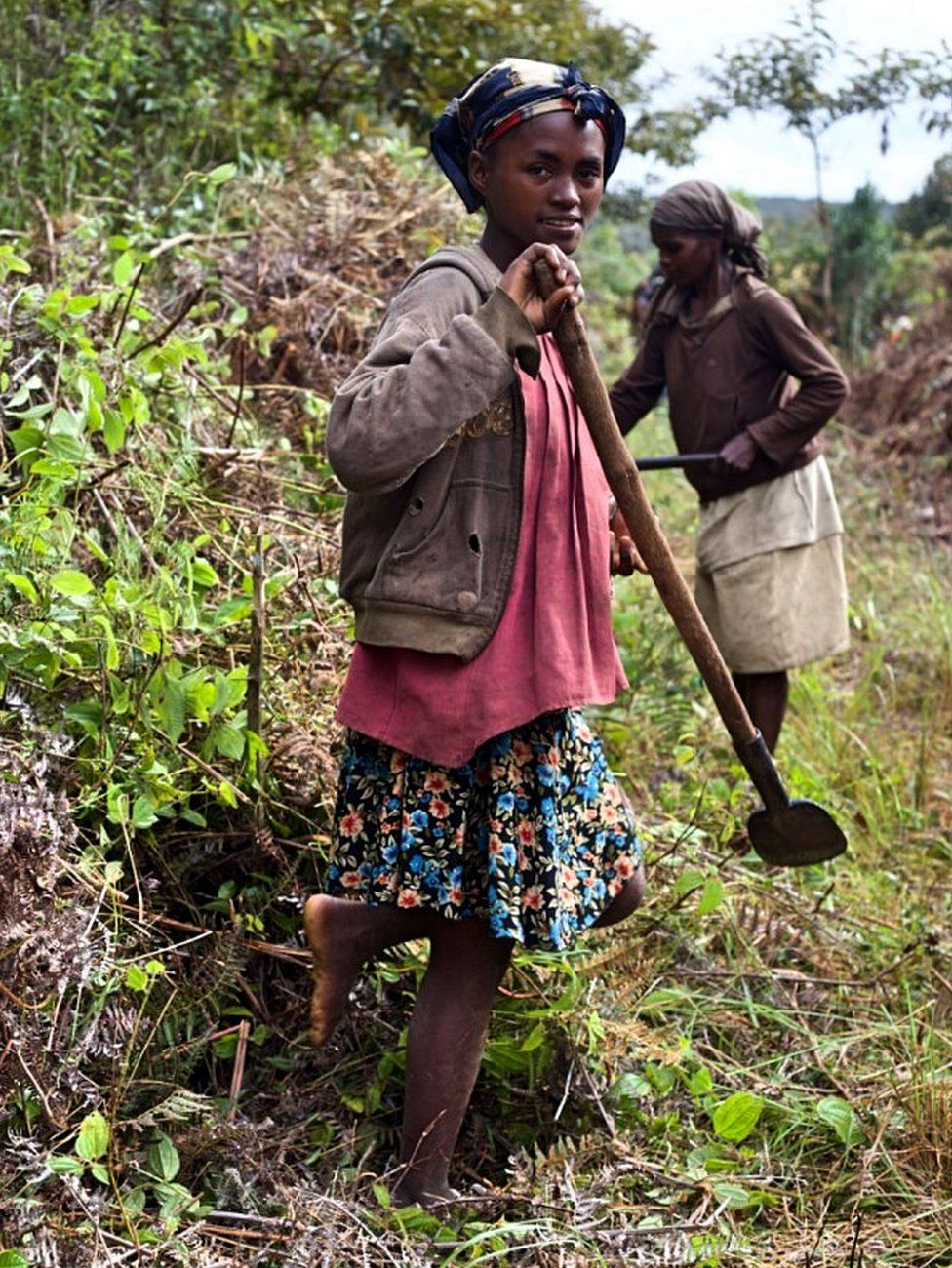 Village residents are employed in forest restoration projects