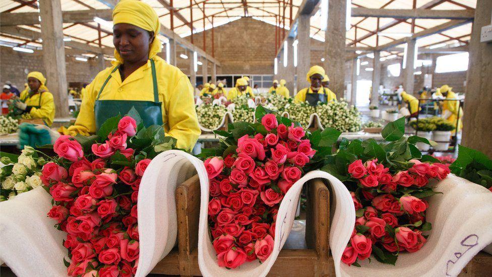 Flower harvester Julia