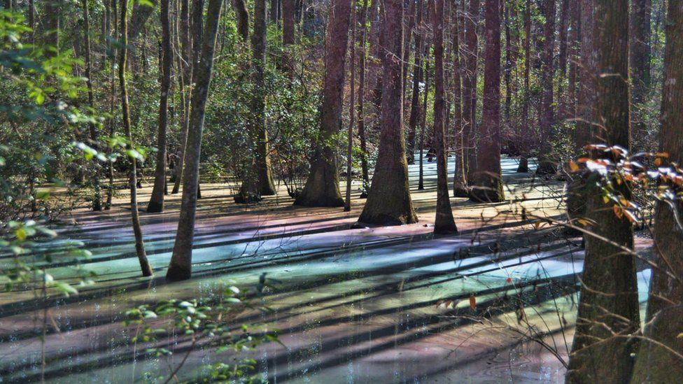 Michael Hussey captured the rainbow sheen on his land in Tallahassee, Florida