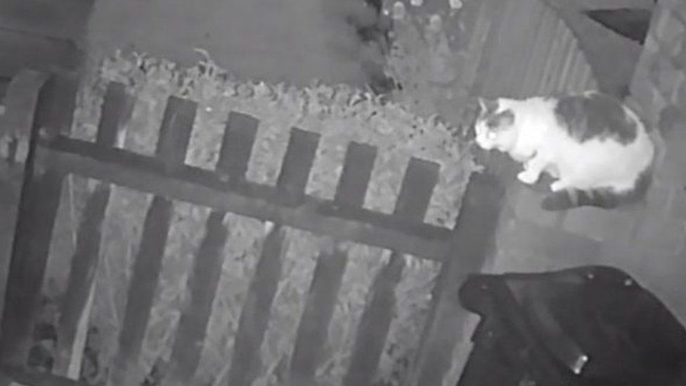 Still image of the cat from the CCTV