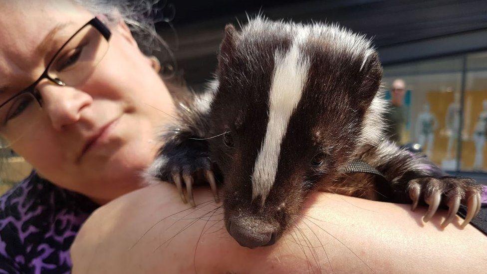 Pet skunk Pongo helps Wakefield nurse's anxiety