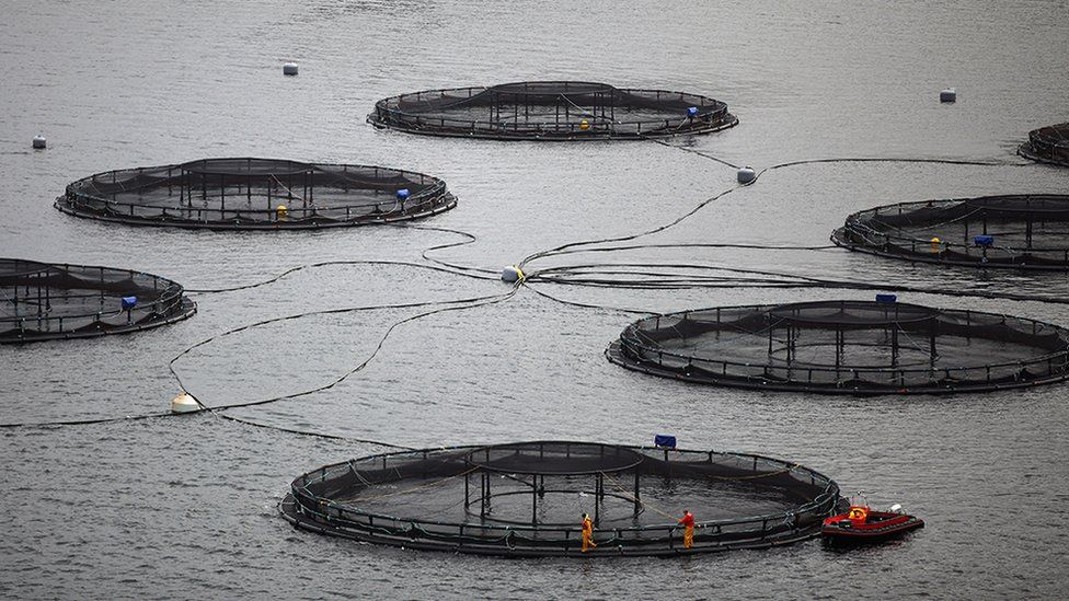 Salmon fish farm