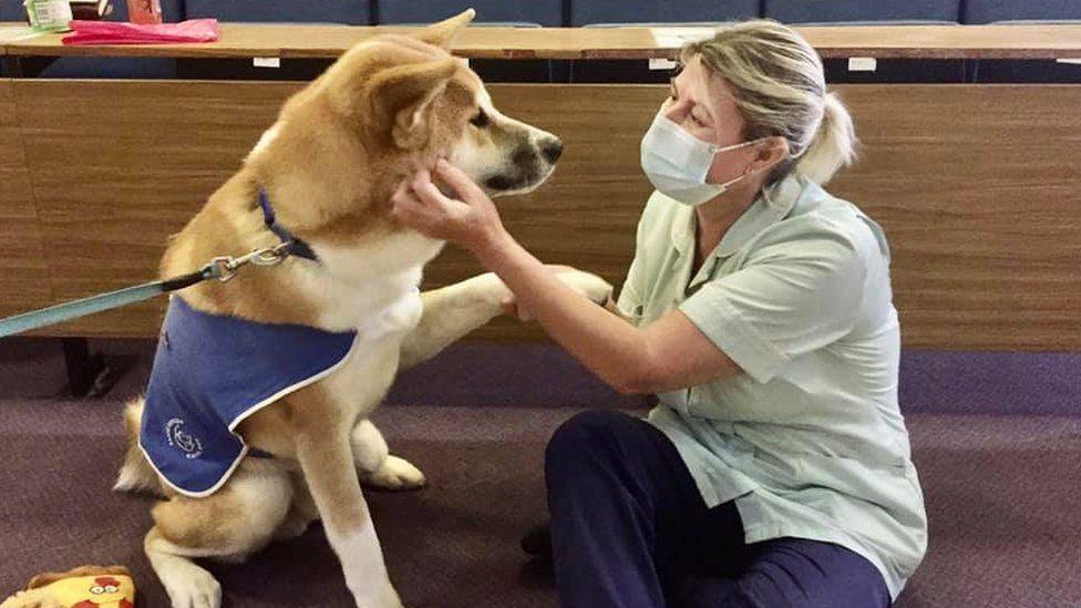 Koji the dog in hospital