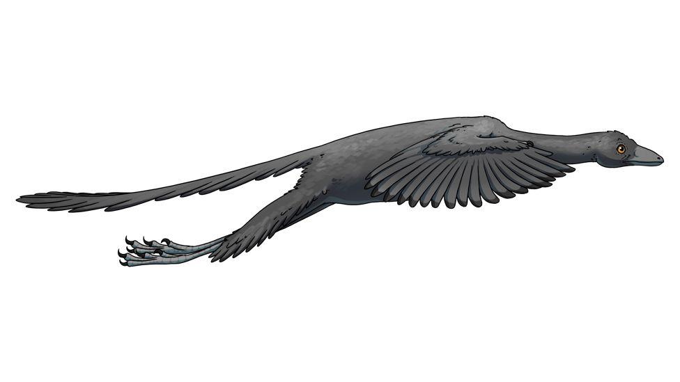 Artist's representation of Archaeopteryx in flight