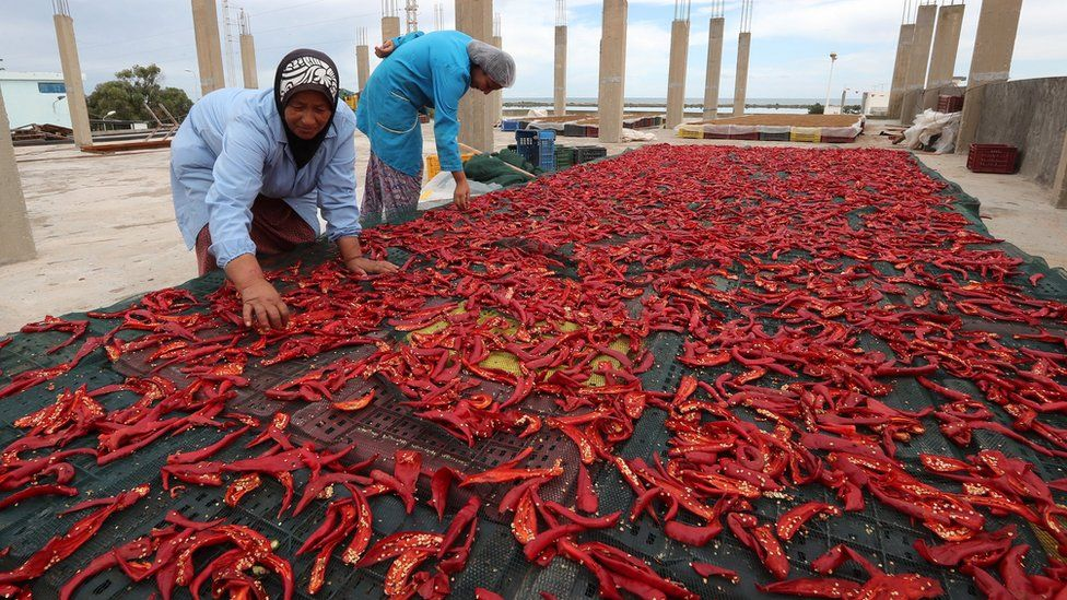 "Tunisian employees work on the production line at the Zgolli factory for Harissa (a Tunisian hot chili) in Korba, 66km from Tunis, Tunisia, 03 October 2018. Harissa is a Tunisian hot chili paste, which is sometimes described as Tunisia""s main condiment""."