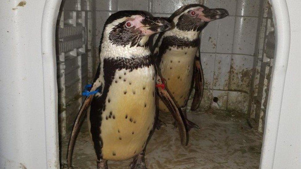 Stolen penguins Nottinghamshire