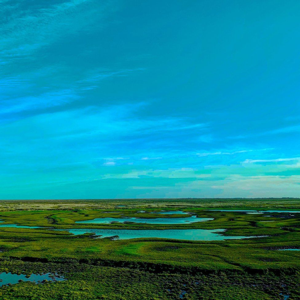 Frampton Marsh nature reserve in Lincolnshire