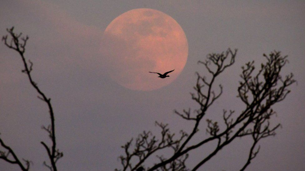 Pink supermoon rising over Highgate hill, in North London