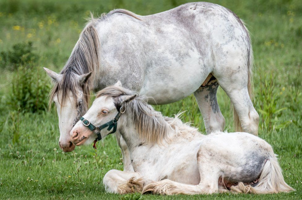 Ponies at Port Meadow, Oxford