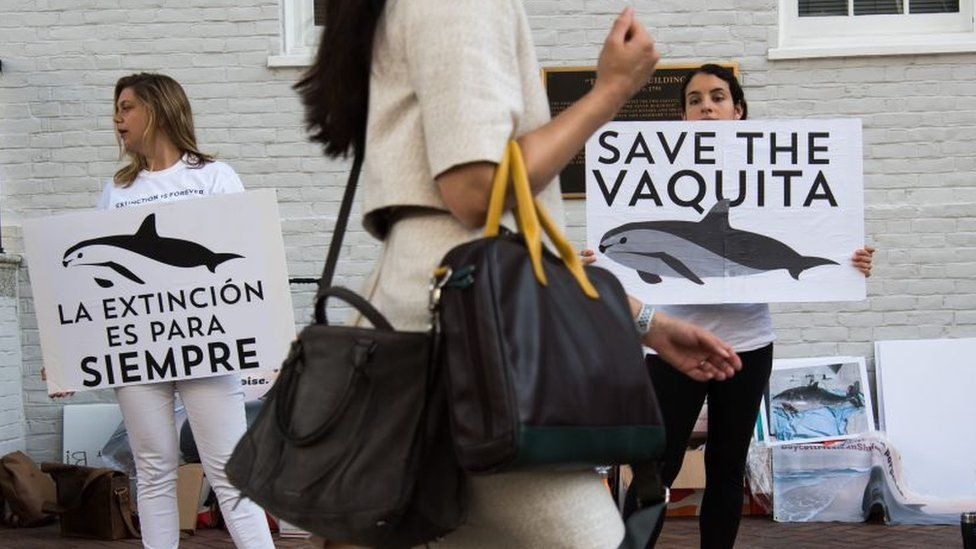 Rally in Mexico to draw attention to the vaquita