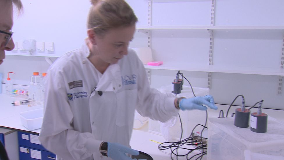 Dr Emilie Pondeville works inside the insectary